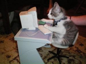 gatto al lavoro pc